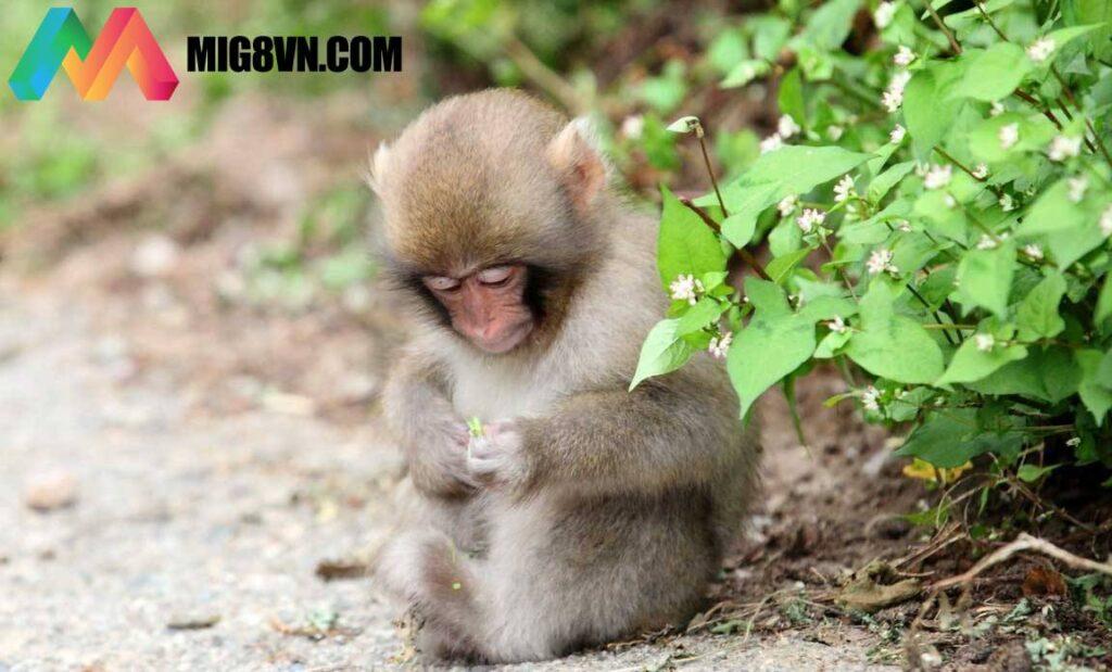 Giấc mơ thấy khỉ
