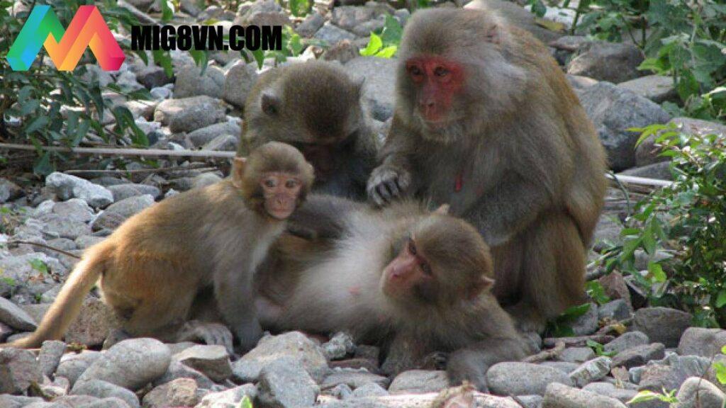 Mơ thấy khỉ đánh con gì