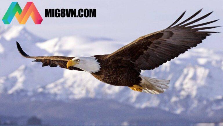 Nằm mơ thấy chim đại bàng