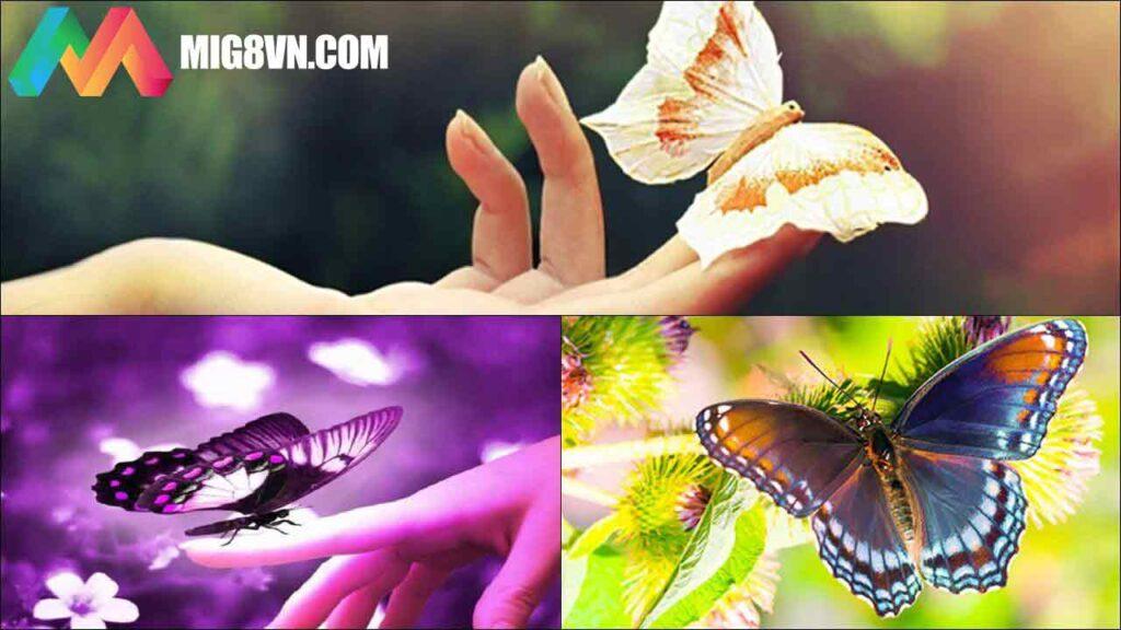 Mơ thấy bươm bướm đánh con gì