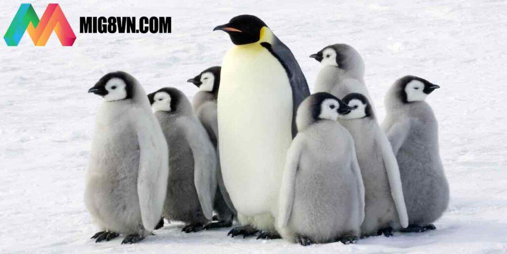 Mơ thấy chim cánh cụt