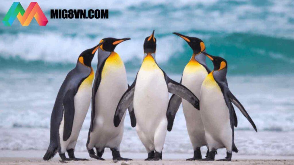 Mơ thấy chim cánh cụt đánh con gì