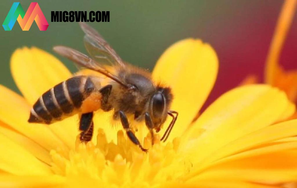 Nằm mơ thấy con ong đánh con gì