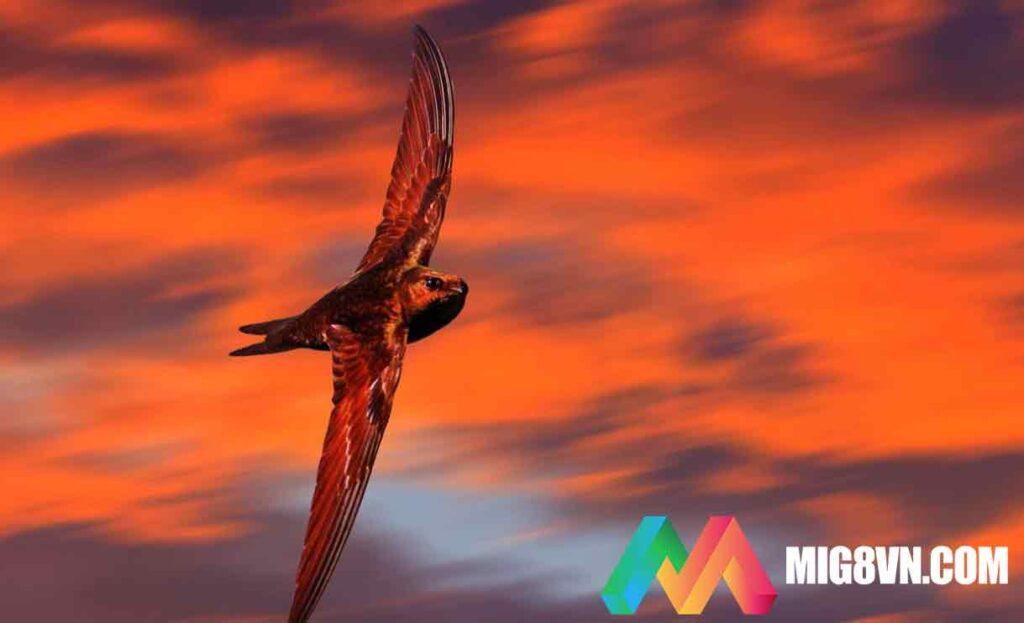 Nằm mơ thấy chim én đánh con gì