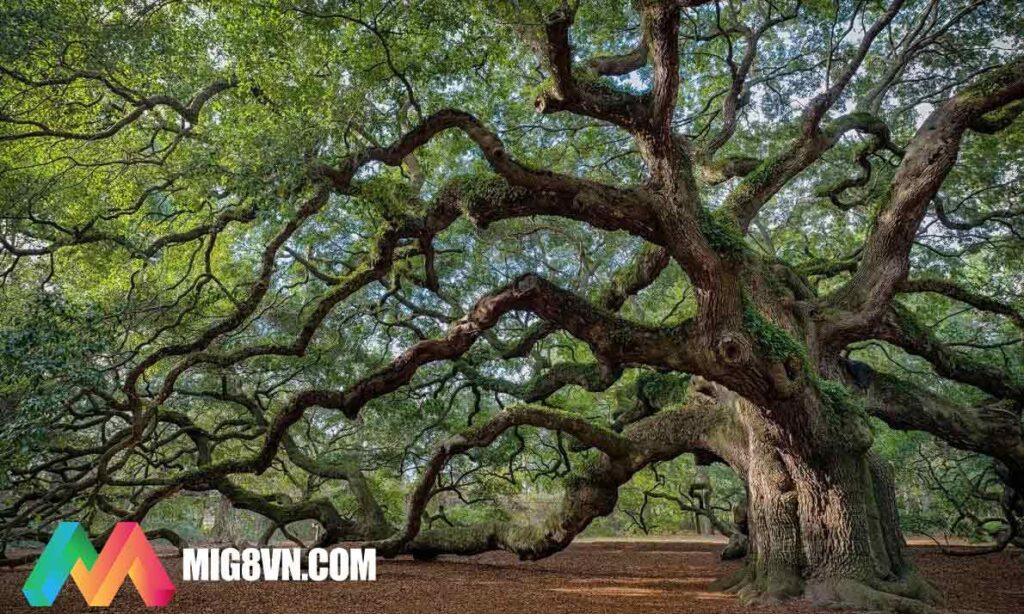 Mơ thấy cây cổ thụ điềm báo gì