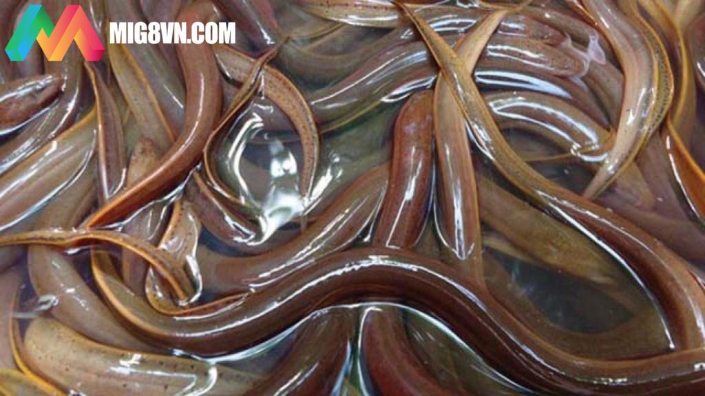 Mơ thấy lươn điềm báo gì