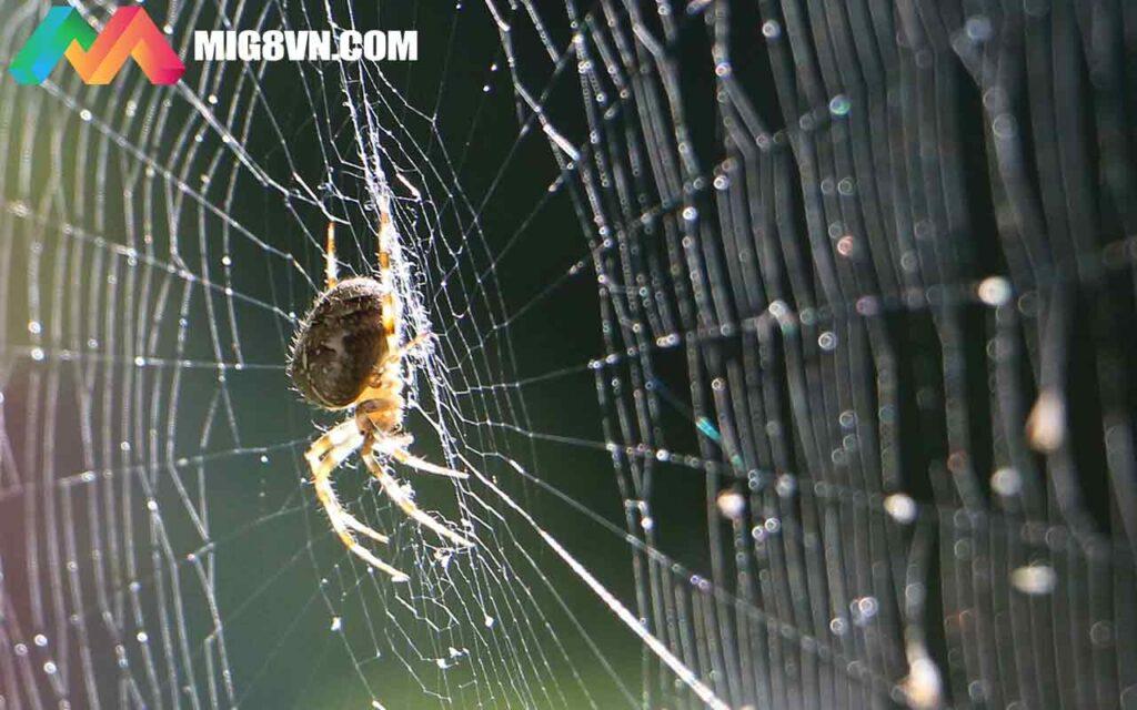 Mơ thấy nhện điềm báo gì