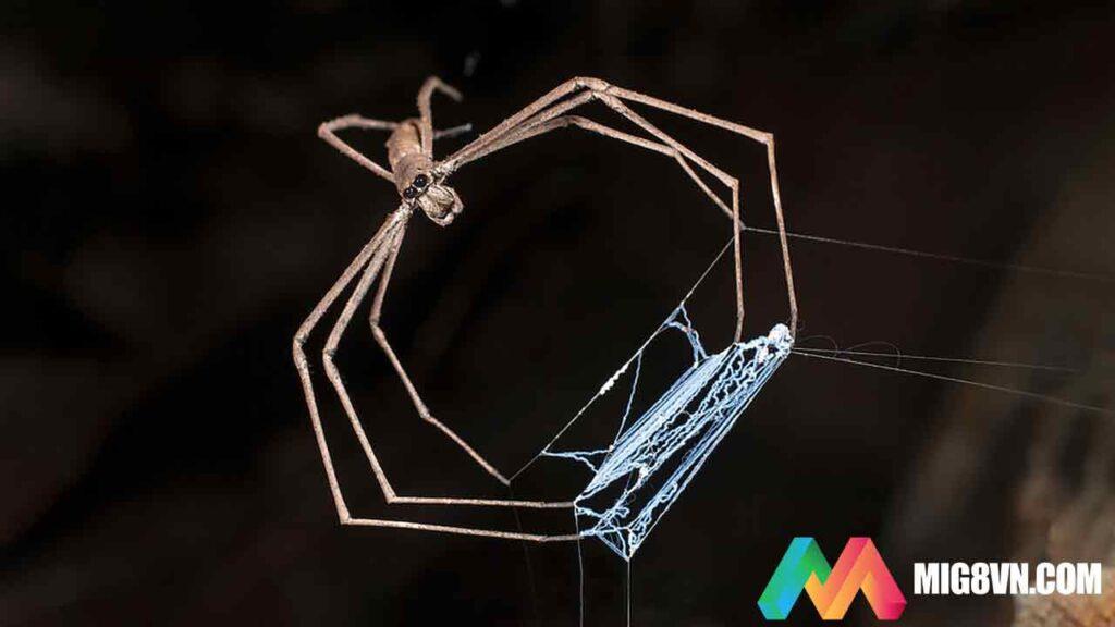 Mơ thấy nhện đánh con gì