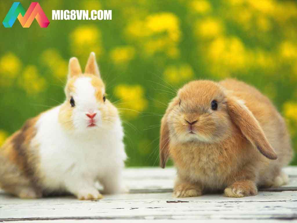 Mơ thấy thỏ điềm báo gì