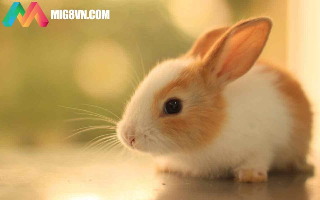 Nằm mơ thấy con thỏ đánh con gì