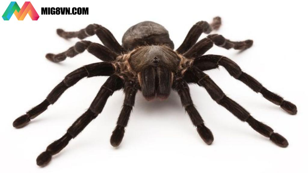 Nằm mơ thấy nhện điềm báo gì