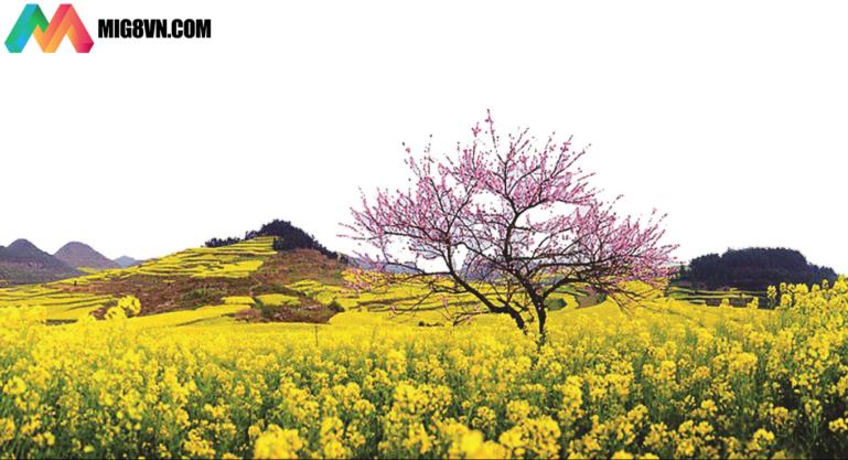 Mơ thấy mùa xuân