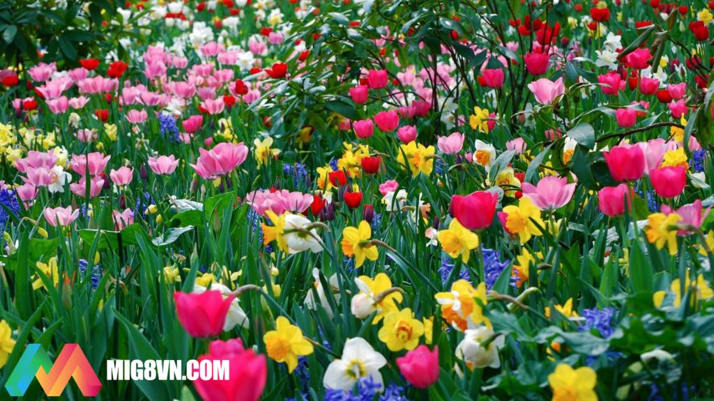Nằm mơ thấy mùa xuân