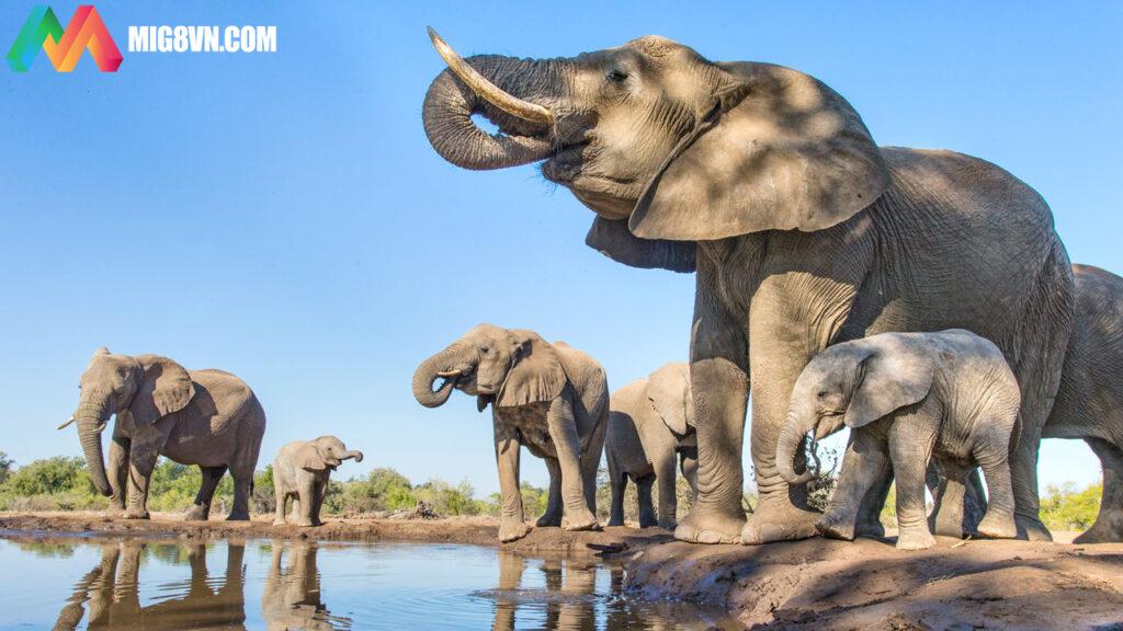 Mơ thấy voi điềm báo gì
