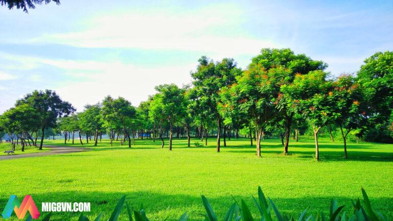 Mơ thấy bãi cỏ