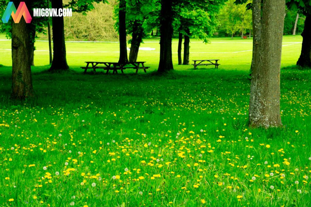 Mơ thấy bãi cỏ điềm báo gì