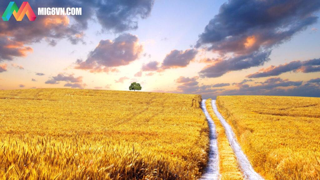 Mơ thấy cánh đồng đánh con gì