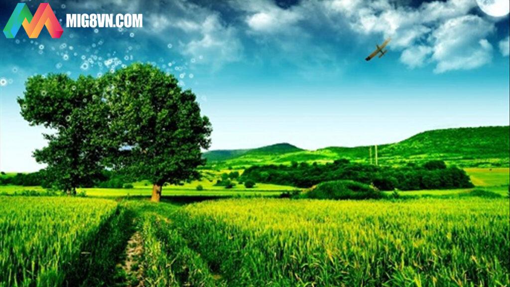 Mơ thấy cánh đồng điềm báo gì