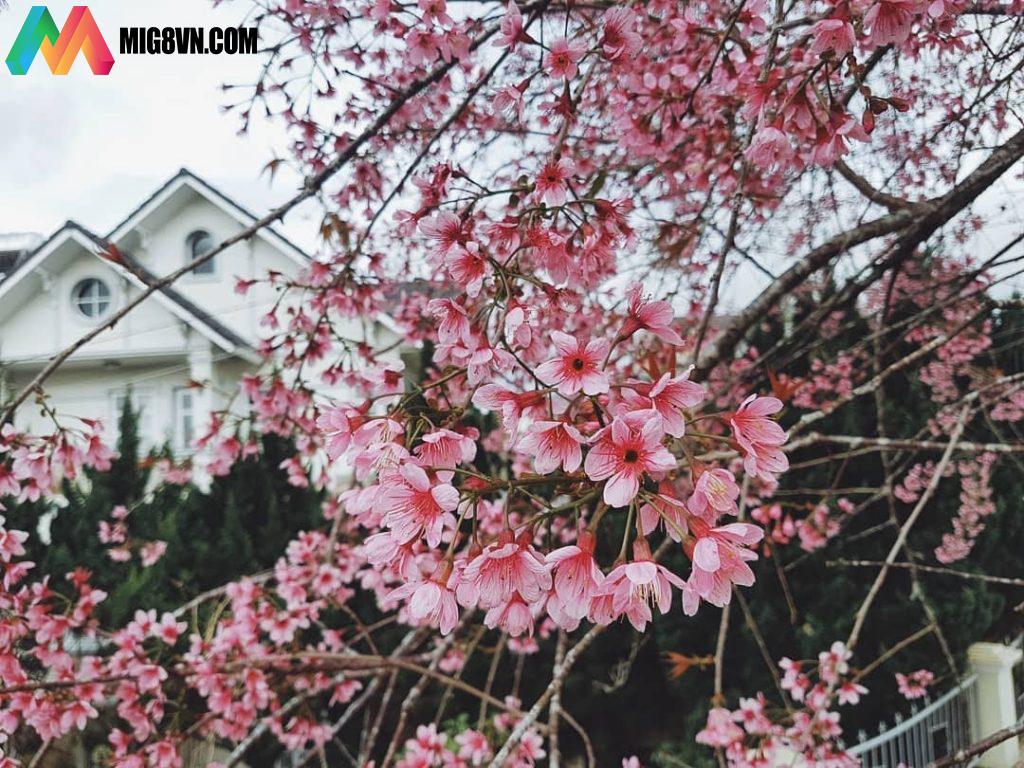 Mơ thấy hoa nở điềm báo gì