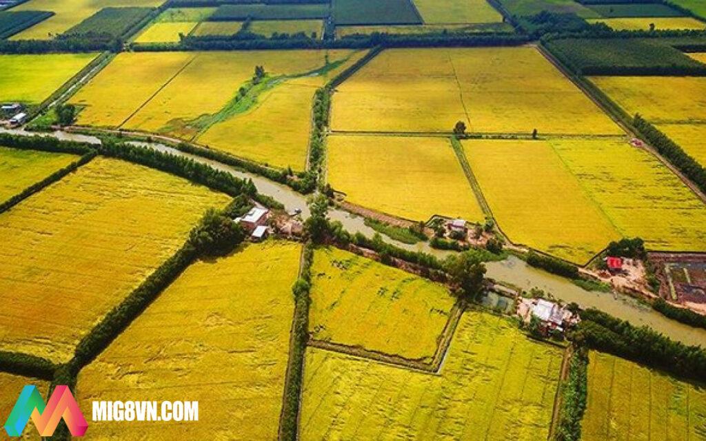 Nằm mơ thấy cánh đồng