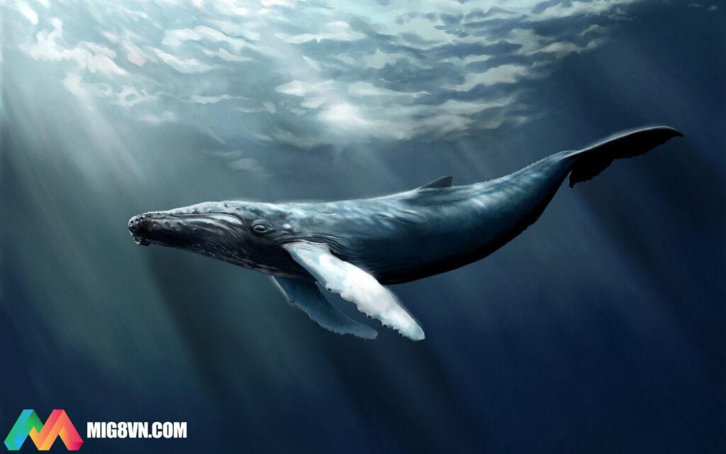 Mơ thấy cá voi điềm báo gì