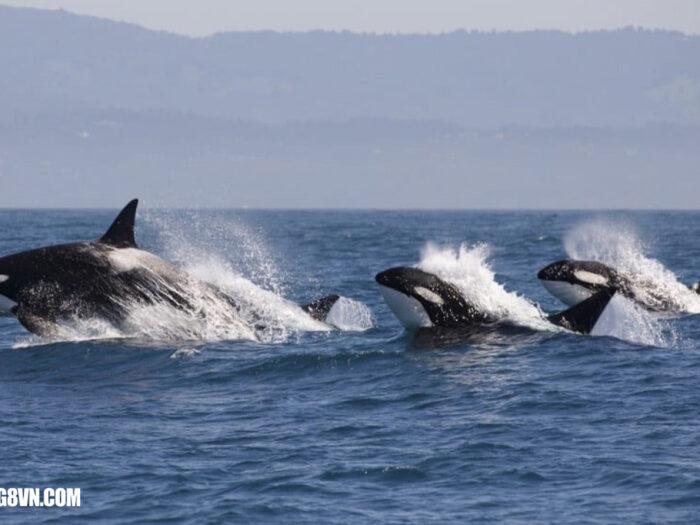 Nằm mơ thấy cá voi