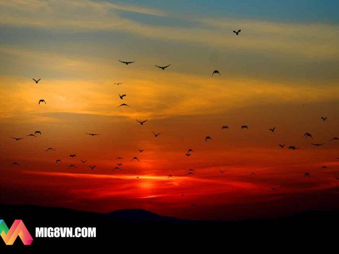 Nằm mơ thấy chim trời